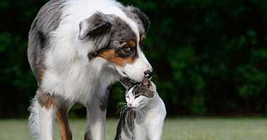 dog with cat outside